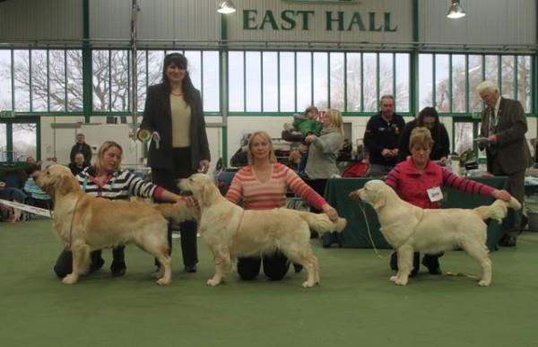 Stoneleigh Park Dog Show  February